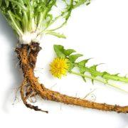 thao-duoc-teresa-herbs-cay-bo-cong-anh