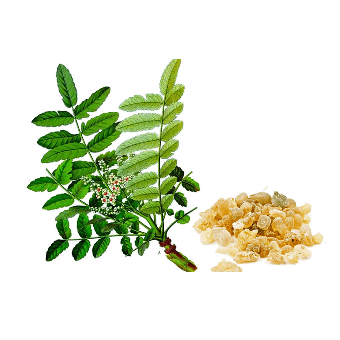 uses-of-indian-frankincense